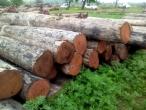 CP Logs
