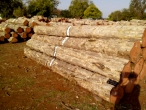 CP Teak Logs