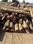 Imported Teak Logs